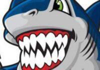 сколько рядов зубов у белой акулы